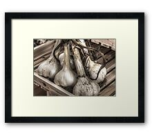 Garlic bunch Framed Print