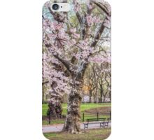 Cherry blooming in Central Park iPhone Case/Skin