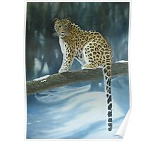 The Amur Leopard Poster