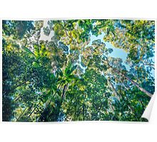 Valley of the Giants, Fraser Island Poster