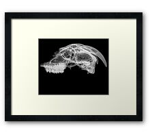 Side View X-ray of a skull of a goat on black background  Framed Print