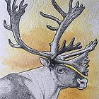 Caribou by Christina Fields