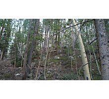 Logpole Pines Photographic Print