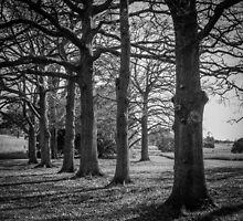 Trees by Christine Wilson