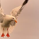 Seagull at Sunset by Cee Neuner