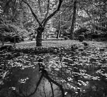 Reflected  Tree by Christine Wilson