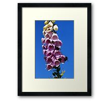 Popular with the bees Framed Print