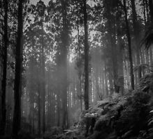 The Black Spur by Christine Wilson