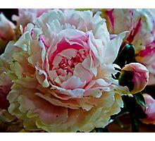 Peony Bloom Photographic Print