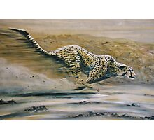 The Cheetah, fastest animal on Earth Photographic Print