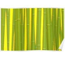 Digitaler Bambus Poster