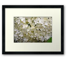 White small beautiful flowers texture. Framed Print