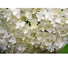 White small beautiful flowers texture. Photographic Print