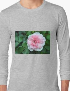 Pink rose macro on a texture on green leaves. Long Sleeve T-Shirt
