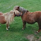 Friends - Shetland Ponies by AnnDixon