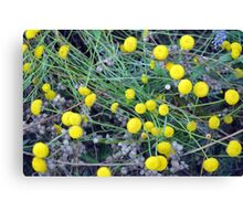 Yellow flowers background Canvas Print