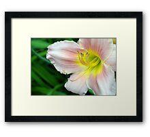 White hibiscus flower. Framed Print