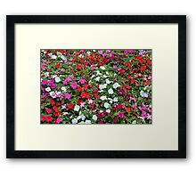 Colorful flowers pattern. Framed Print
