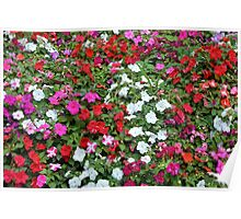 Colorful flowers pattern. Poster