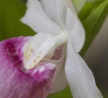 orchid in the garden Sticker