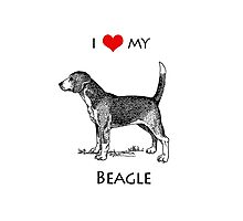 I Love My Beagle Dog Photographic Print