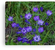 Blue Wayside Flowers Canvas Print