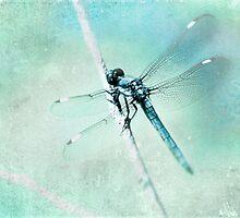 Blue Dragon Fly by Debbra Obertanec