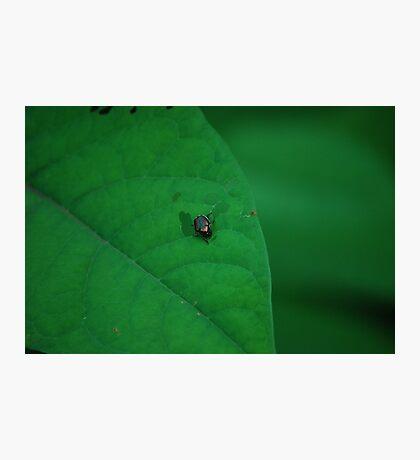Invader  Photographic Print