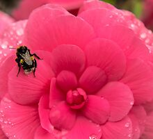 Bee on the flower by Anastasia E