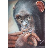 Pondering Chimp Photographic Print