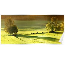 horses on green meadow Poster