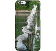 Gulls iPhone Case/Skin