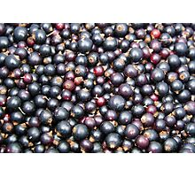 Black currants Photographic Print