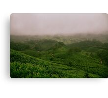 panoramic view of misty Canvas Print