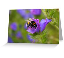 White Tailed Bumblebee Greeting Card