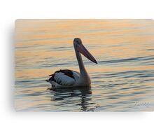 Peaceful Pelican Canvas Print