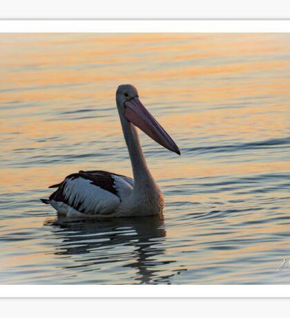 Peaceful Pelican Sticker