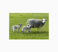 A ewe and her young lambs Unisex T-Shirt