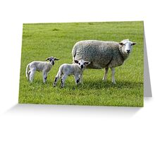 A ewe and her young lambs Greeting Card