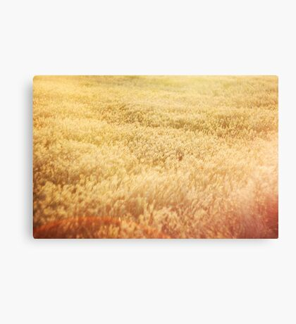 Golden field Canvas Print