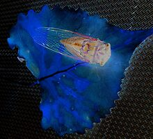 Cicada on a Blue Leaf by Mike Solomonson