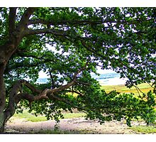 Horizontal Trees Photographic Print