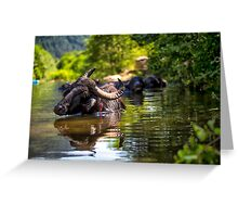 Bull in the water Greeting Card