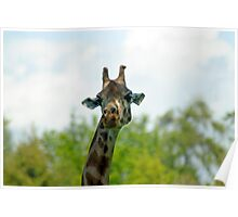 Quirky giraffe looking at you Poster