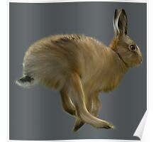 March Hare Poster