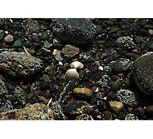 Sea shell on pebble beach Photographic Print