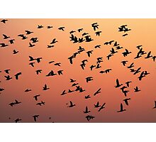Flock f Birds at Sunset Photographic Print