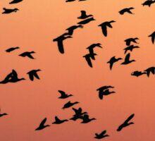 Flock f Birds at Sunset Sticker
