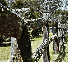 The old fence, it's still standing by myraj