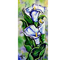 Lily Blue Flowers Purple Green Yellow Beautiful Photographic Print